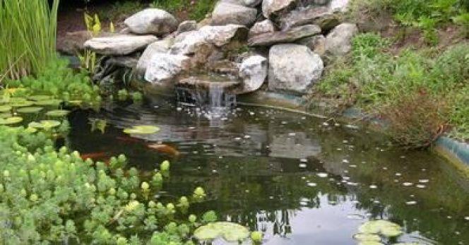 bassin de jardin avec cascade