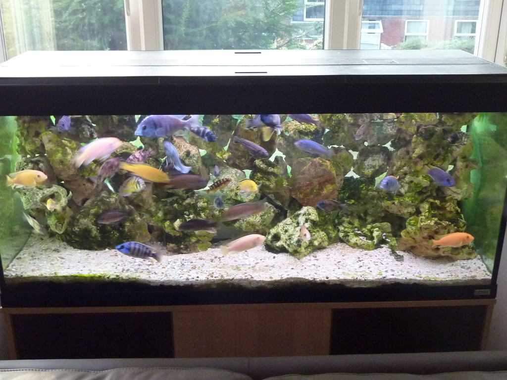 aquarium 240 litres