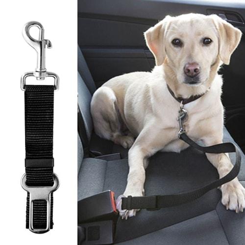 ceinture de sécurité chien