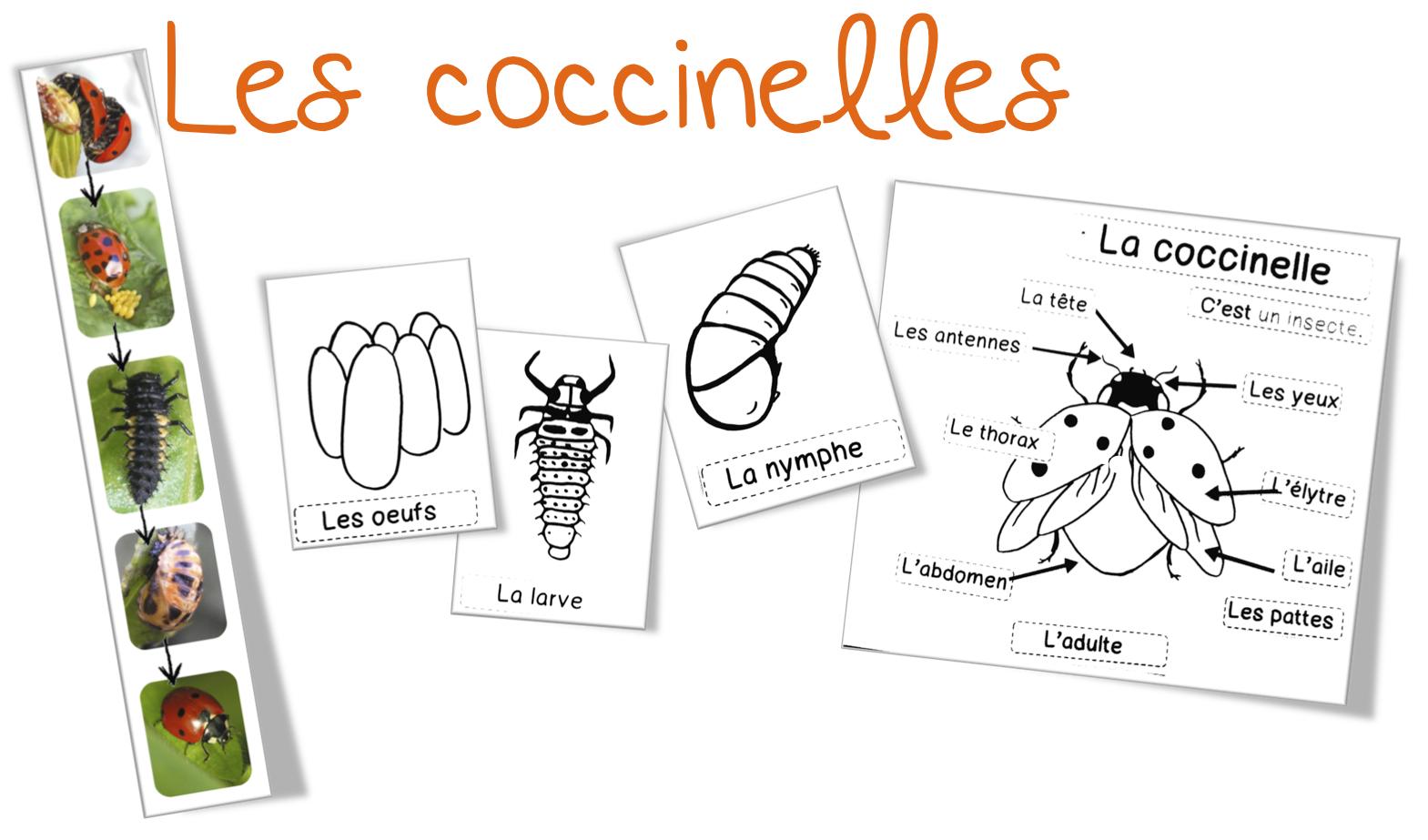 coccinelle cp ce1