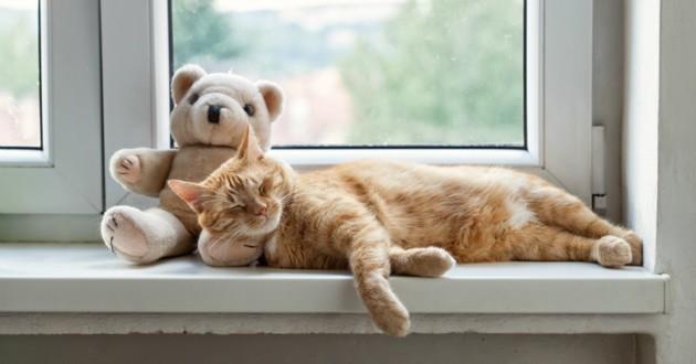 doudou pour chat