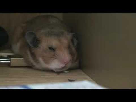 hamster com x