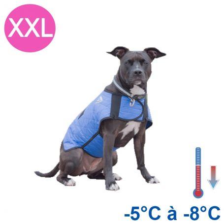 manteau rafraichissant chien