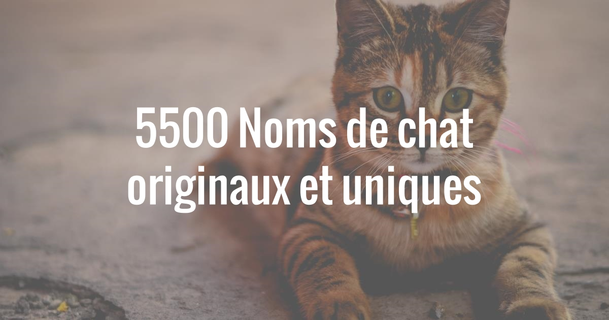 nom de chat original et court