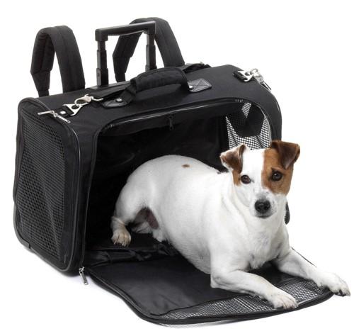 panier de transport chien