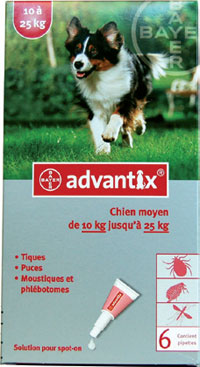 pipette anti puce chien