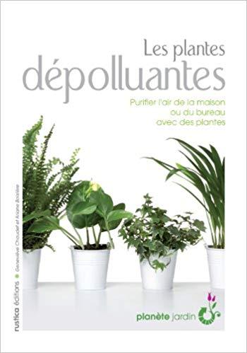 plantes dépolluantes
